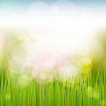 Spring natural background with grass sky sun glare Stock Photography