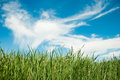 Spring nature background with grass and blue sky in the back Royalty Free Stock Photo