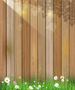 Spring nature background. Green grass and leaf plant, White Gerbera, Daisy flowers and sunlight over wood fence