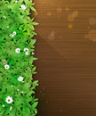 Spring nature background. Green grass and leaf plant, White Gerbera, Daisy flowers and sunlight over wood floor Royalty Free Stock Photo