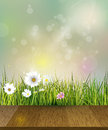 Spring nature background vector green grass field with white gerbera daisy flowers meadow and sun light over wood floor water Stock Images