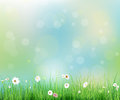 Spring nature field with green grass white gerbera daisy flowers at meadow and water drops dew on green leaves vector illustration Stock Photo