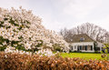 Spring in the netherlands old dutch mansion tucked behind lush blossoming japanese cherry and beech hedge with brown leaves from Stock Photo