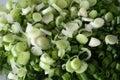 Spring Onion Royalty Free Stock Photo
