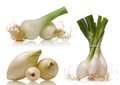 Spring onion on white background Royalty Free Stock Images
