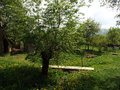 Spring orchard with flowering grass