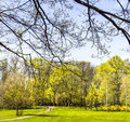 Spring park beautiful in sunshine Royalty Free Stock Photography
