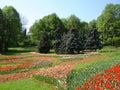 Spring park in springtime in ukraine kiev Royalty Free Stock Photos