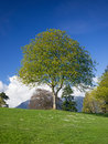 Spring in park tree with fresh green leaves meadow Royalty Free Stock Image