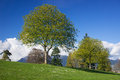 Spring in park tree with fresh green leaves meadow Stock Image
