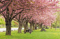 Spring picnic area set under the blossoms of the flowering crab trees Royalty Free Stock Photos
