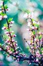 Spring Pink Blooming
