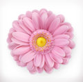 Spring pink flower, vector icon Royalty Free Stock Photo