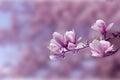 Spring Pink Tree
