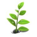 Spring plant Royalty Free Stock Photo