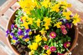 Spring plant arrangement in flower pot colorful a on a wooden table Stock Images