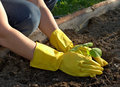 Spring planting Stock Photos