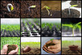 Spring planting seedlings, Gardening, growing vegetables collage Royalty Free Stock Photo