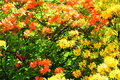 Spring plants colors Royalty Free Stock Photo