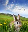 Spring rabbit Royalty Free Stock Photo