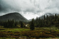 Spring rain in the wasatch low clouds hang over cardiff fork road just off big cottonwood canyon road national forest utah usa Royalty Free Stock Image