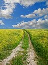 Spring road path grass green naturegreen meadow  road  through the grass blue srping cloudy sky Royalty Free Stock Photo