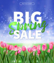 Spring sale Background with tulips and daisies EPS 10 vector royalty free stock illustration for greeting card, ad