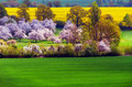 Spring scene with blooming trees and fields