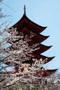 Spring Season In Japan