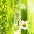 Spring seasonal collage Royalty Free Stock Photo