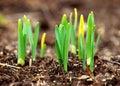 Spring shoots Stock Photos