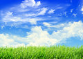 Spring sky green grass and cloudy Royalty Free Stock Images