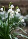Spring snowflake Royalty Free Stock Photo