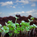 Spring sprouts on blue sky new beginning in black soil with Stock Image