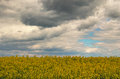 Spring storm clouds above rape seed field. Rape flowers blooming in spring. Landscape in spring cloudy day Royalty Free Stock Photo