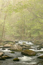 Spring Stream in Fog Stock Photography