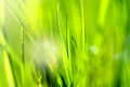Spring and summer abstract nature background with grass and sun close up macro Royalty Free Stock Image