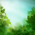Spring or summer background with leaves Stock Photos