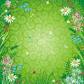 Spring or summer floral background Royalty Free Stock Image