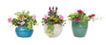 Spring Summer flower pots isolated on white Royalty Free Stock Photo
