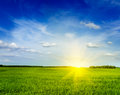 Spring summer green field scenery landscape background grass meadow with blue sky Royalty Free Stock Photo