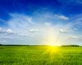 Spring summer green field scenery landscape