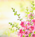 Spring summer nature background with pink blooming bush floral border Royalty Free Stock Photo