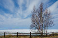 Spring thaw of frozen lake superior from the shore with a tree in the foreground Royalty Free Stock Photos