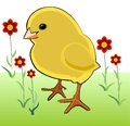 Spring thema chicken and flowers funny illustration with a yelllow red Stock Photos