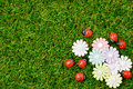 Spring theme green grass garden with ladybugs and flower Royalty Free Stock Images