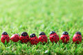 Spring theme green grass garden with ladybugs in a row Royalty Free Stock Photos