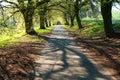 Spring time aley lime tree tilia x vulgaris shadows Royalty Free Stock Photography