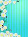 Spring Time Daisies Ladybugs Vertical Background Royalty Free Stock Photos