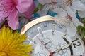 Spring time has come. Season Spring Royalty Free Stock Photo